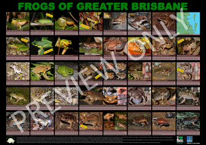 Frogs_of_Bris_poster2014_ver3
