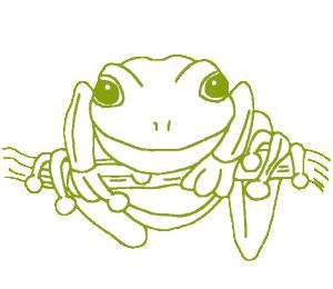 www.qldfrogs.asn.au