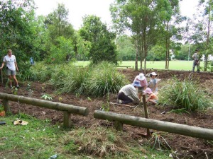 QFS members maintaining frog habitat at Bowman Park